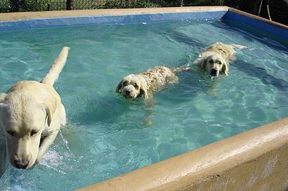 Centro canino miraflores for Piscina perros